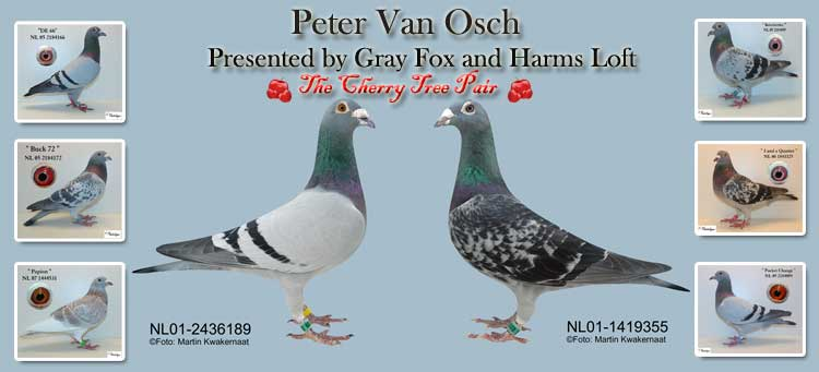 Peter Van Osch, Presented by Gray Fox and Harms Loft